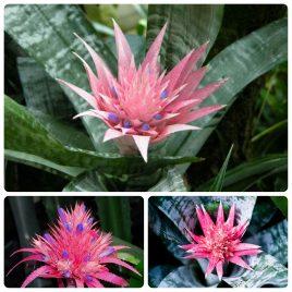 Saksijsko cveće (2)