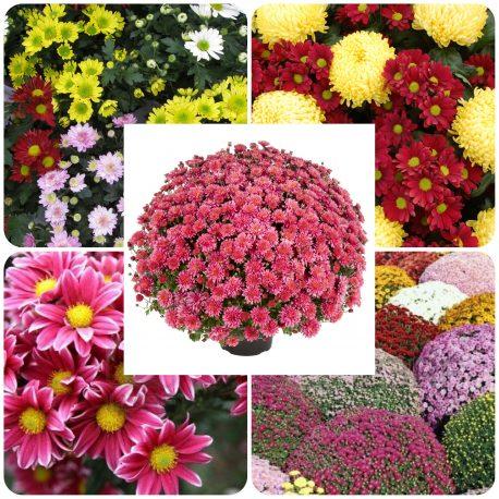 Saksijsko cveće (28)