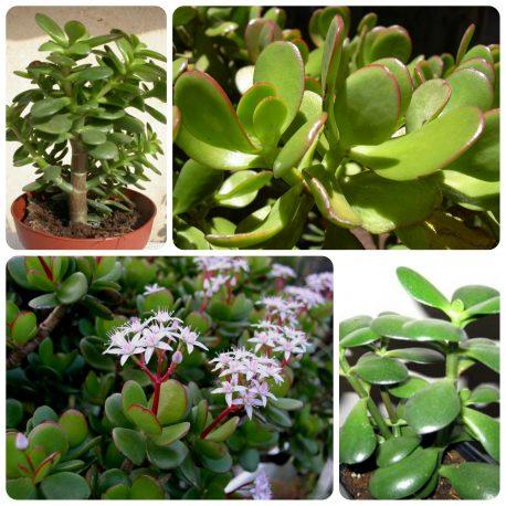 Saksijsko cveće (36)