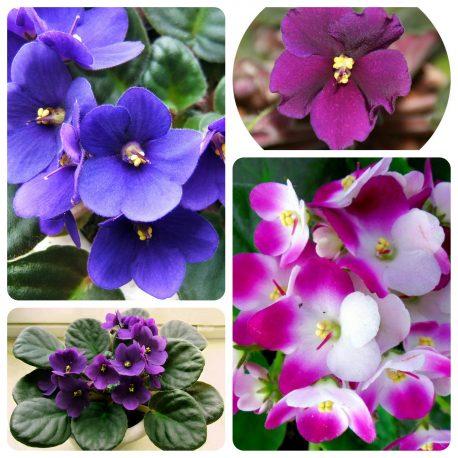Saksijsko cveće (39)