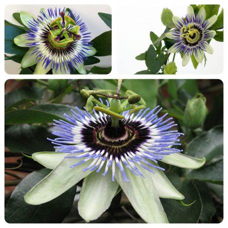 Saksijsko cveće (46)