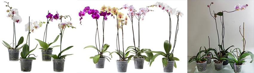 orchidblogspojeno