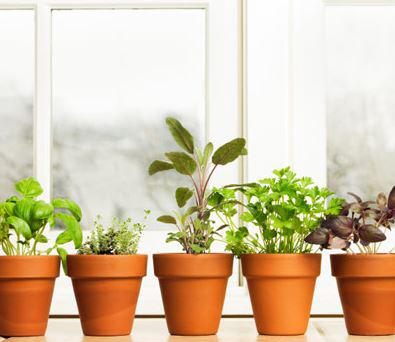 Začinsko bilje na dohvat ruke – prvi deo