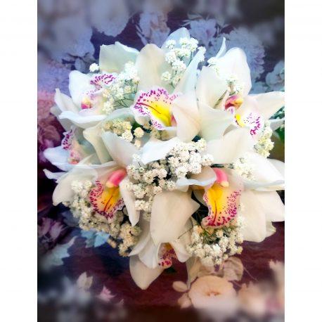 biderrmajer orhideje