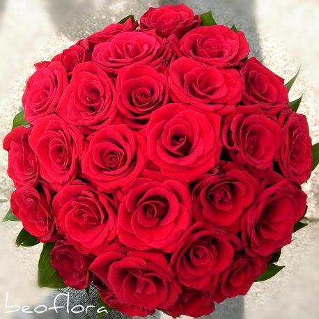 Bidermajer Beoflora crvene ruze