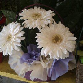 Korpa (6)