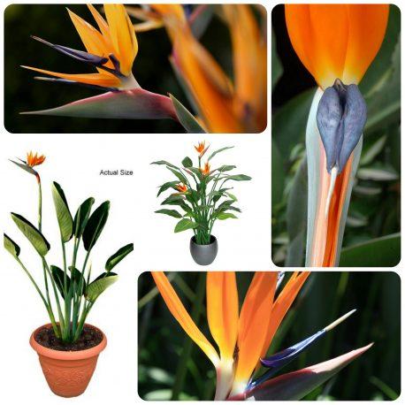 Saksijsko cveće (54)